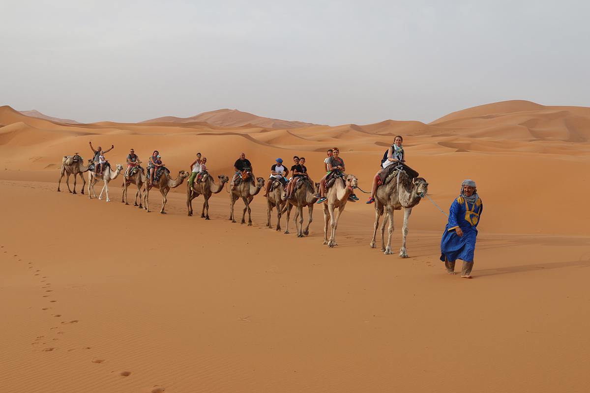 erg chebbi camellos
